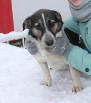 Здоровые,  привитые и стерилизованные собачки из приюта