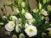 Эустома (Лизиантус) цветы от производителя