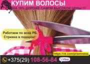 Натуральные волосы. Скупка в Бресте и области. Купим волосы.