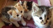 очаровательные котята даром